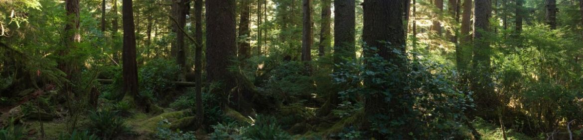 Lush Vancouver Island West Coast Rainforest in British Columbia