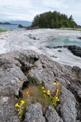 Beautiful Coastal Waters and Nature on Vancouver Island