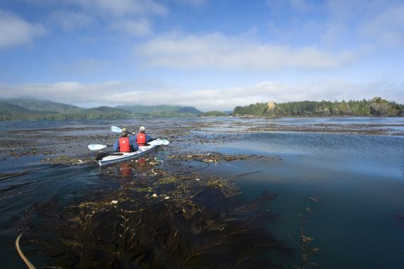 sea kayaking through kelp forest on west coast