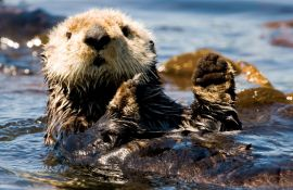 5-Day Sea Otter Kayak Tour