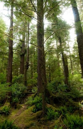 Adventure Travel to the Stunning Nature and Forests of Vancouver Island, BC